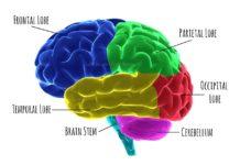 ריפוי בכוח המוח Archives - שמן קנאביס