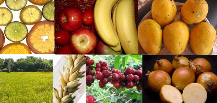 תזונה מותאמת אישית - תזונה מותאמת אישית לפי סוגי תזונה שונים - שמן קנאביס